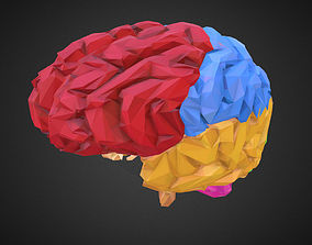 3D asset Low Polygon Art Medical Brain Color