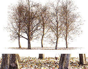 Collection of dry autumn tree collection 5 3D model 3