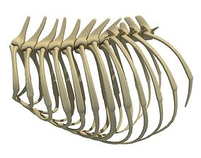 Highly Detailed Lion Rib Cage 3D model