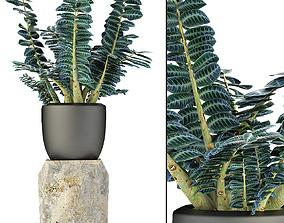 3D model flowerpot Plant in Pot Flowerpot Exotic Plant
