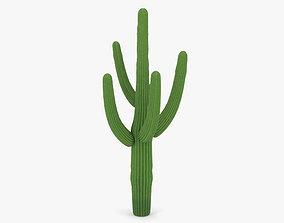 3D model Saguaro