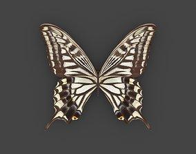 3D BFLY-007 Butterfly