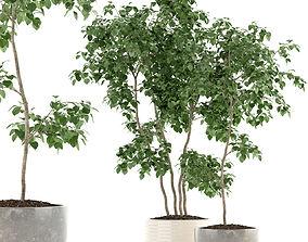 3D Plants collection 96