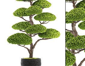 3D botany bonsai tree