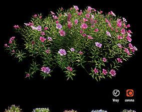 Plant Flower set 17 3D model