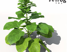 XfrogPlants Spinach 3D model
