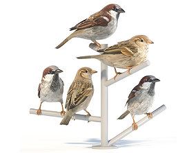 3D model House Sparrow - perched