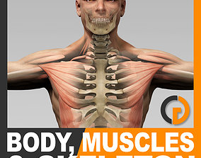 3D Human Male Body Muscular System and Skeleton - Anatomy