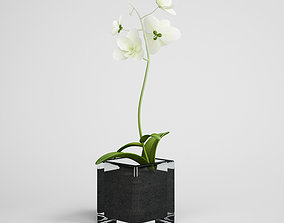 CGAXIS Potted White Flower 3D model