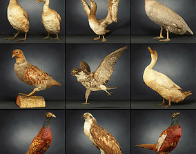 3D model 9 Birds Collection 1