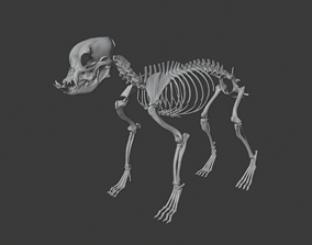 animal-skeleton English Bulldog skeleton 3D printable model