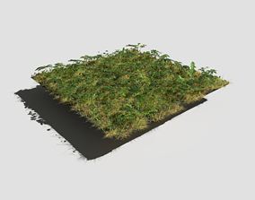 Meadow Patch Ashweed Dense and Free Gift 3D