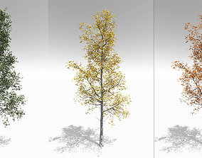 Seasonal Adult Quaking Aspen - Variation 3D model
