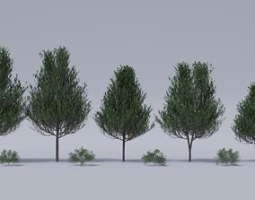 Generic Tree Pack 1 3D model