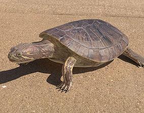 Turtle 3D