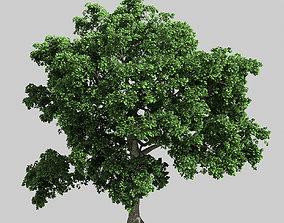 Forest - Eucalyptus 32 3D