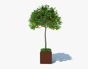 Orange Tree in a Pot 3D model