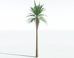 EVERYPlant Date Palm LowPoly SINGLE --1 Model-- realtime