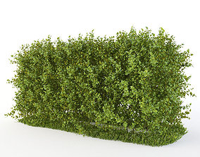 3D model shrub Hedge of bushes