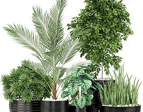 Plants collection 348 3D