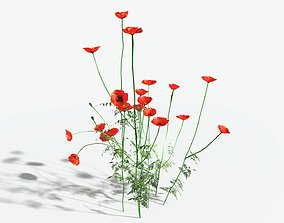 EVERYPlant Field Poppy LowPoly 11 --16 Models-- game-ready