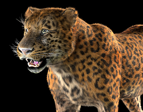 Leopard Rigged Hairs 3D model