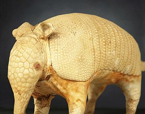 3D asset game-ready Armadillo Photorealistic Posed