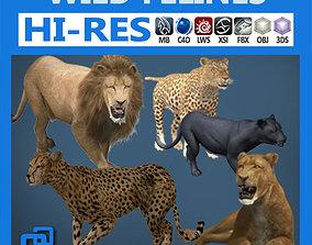 Pack - Wild Felines 3D model