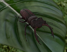 3D model Stag Beetle