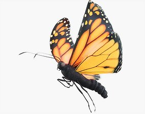 3D model Monarch Butterfly Animated with Fur
