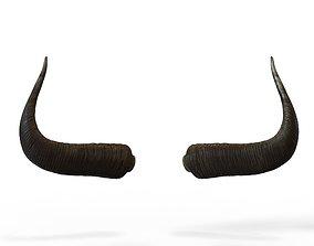 3D asset Bull Horns