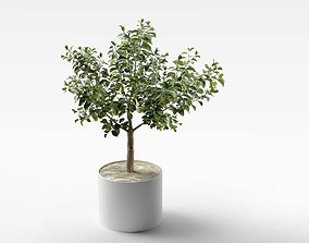 3D Lemon Tree in Pot