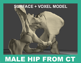 3D model HUMAN HIP BONES FROM CT-SCAN