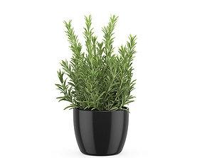 3D model Rosemary pot