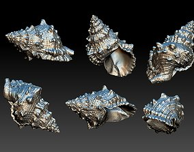 teddy Shell 3D print model