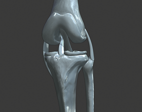 Knee ligaments model
