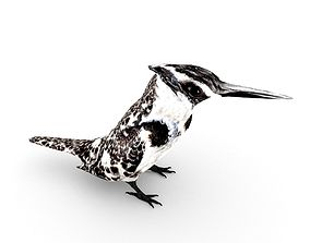 3D model Pied Kingfisher Ceryle rudis
