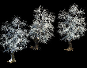 Ice and snow - rime 3D