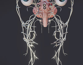 3D asset Cranial Nerves and Brain Stem