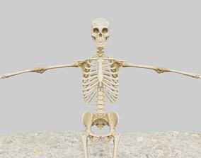 game-ready human skeleton game ready model