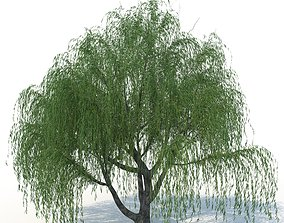willow tree 3D model PBR