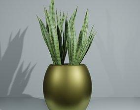 Indoor snake plant 3D asset