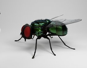 nature 3D housefly