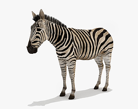 Zebra 3D model low-poly