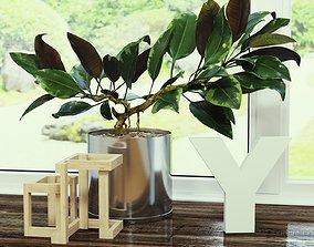 Ficus flower 3D