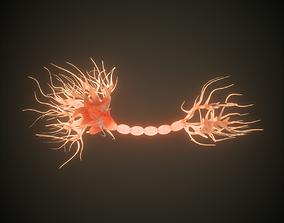Neuron Human anatomy model