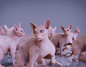 3D model sphynx cats