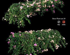 3D Rose plant set 29