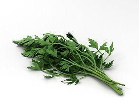 3D Parsley petroselinum