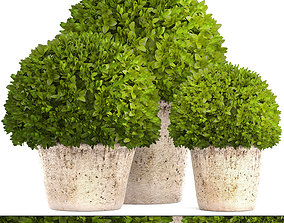 3D Topiary bush Buxus